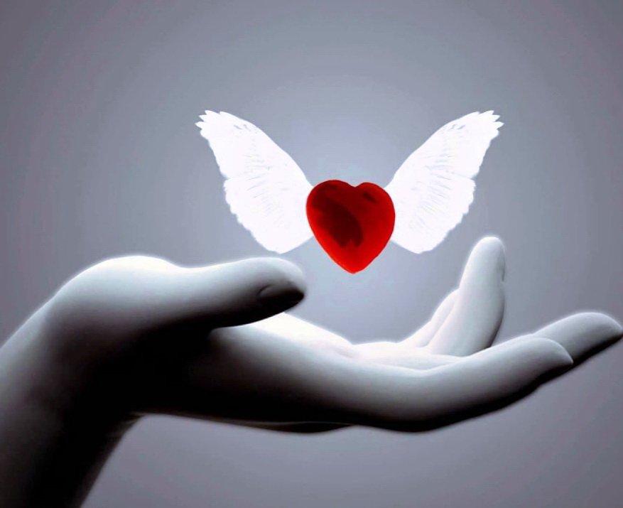 III Дальневосточный Форум Нар-Анона «Любовь и Дар отстранения»
